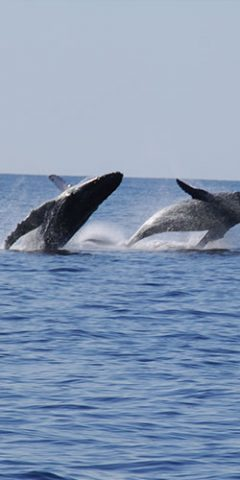 Cabo San Lucas Transportation for Whale Watching